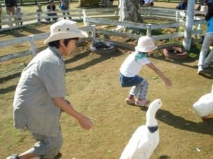 Duck_race_1